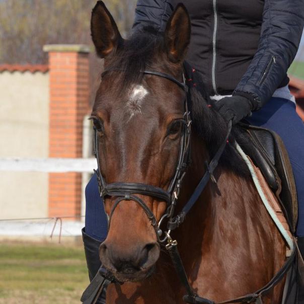 lovas ülése lovasoktatás DEbrecen